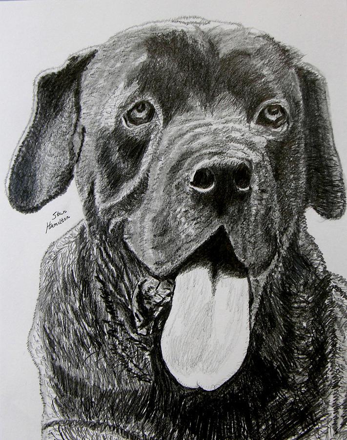 Dog Portrait Drawing - Sampson by Stan Hamilton