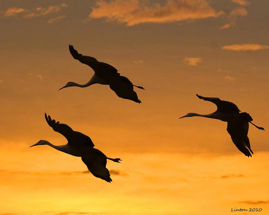 Sandhill Cranes Photograph - Sandhill Cranes At Dusk by Larry Linton
