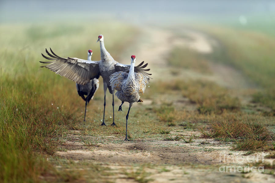 Birds Photograph - Sandhills 1 by Rick Mann