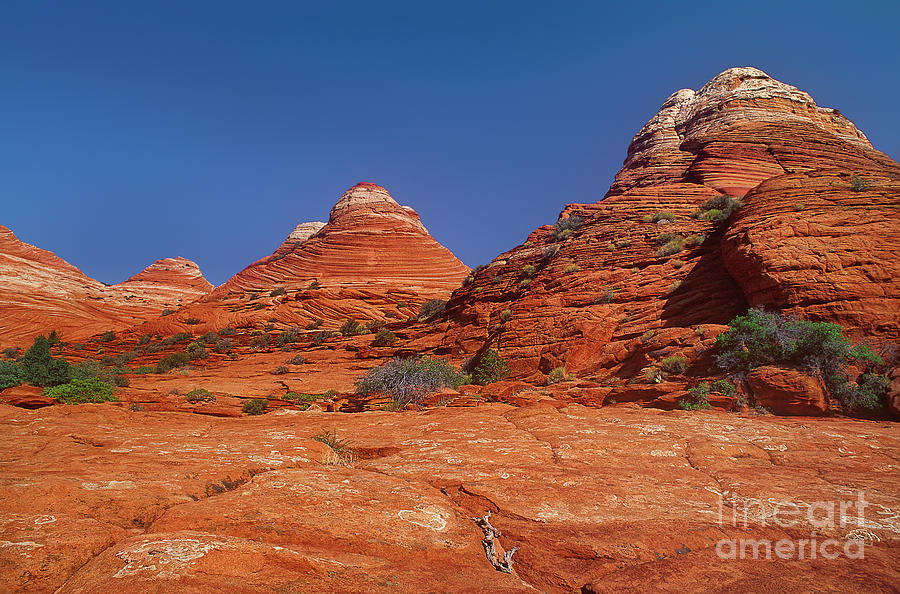 sandstone formations colorado plateau utah by Dave Welling