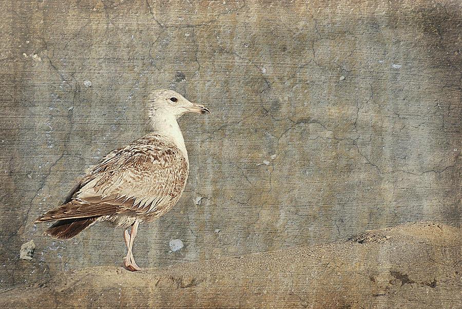 Jersey Shore Photograph - Seagull - Jersey Shore by Angie Tirado