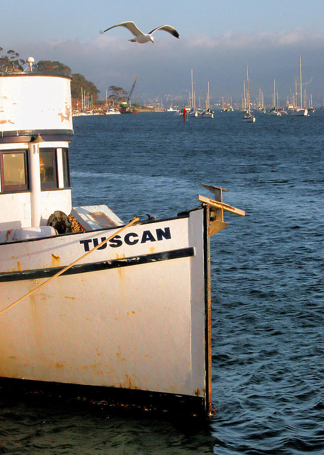 Boats Photograph - Seagull Morro Bay California by Bill Mollet