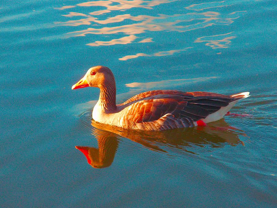 Seagull Photograph - Seagull by Q J