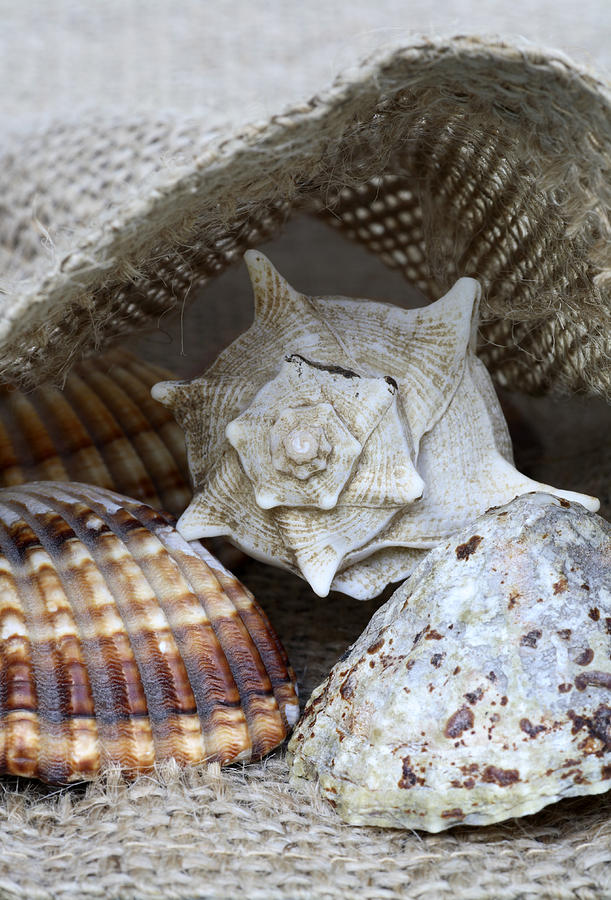 Sea Photograph - Seashells by Frank Tschakert