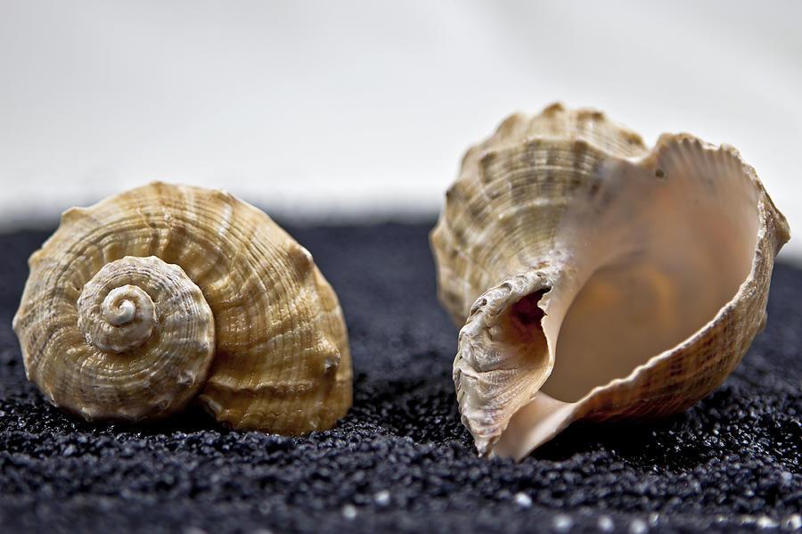 Contrast Photograph - Seashells On Black Sand by Joana Kruse