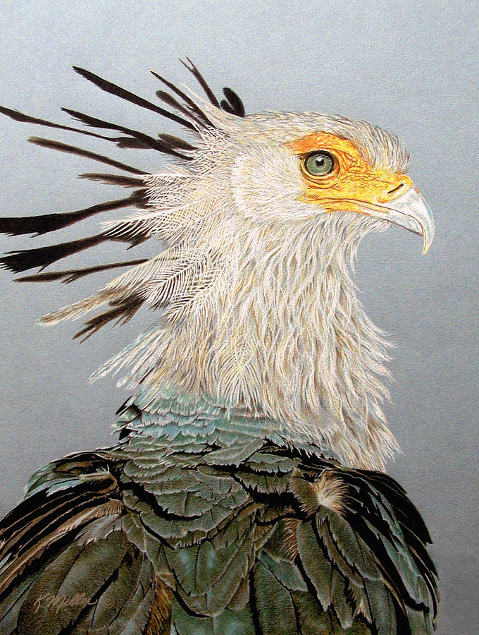 Bird Of Prey Drawing - Secretary Bird by Kathie Miller