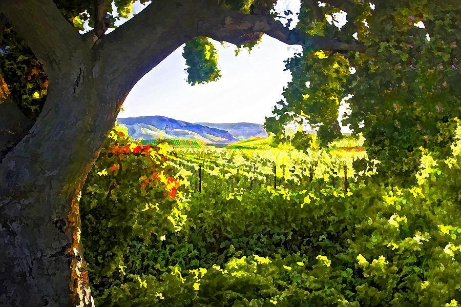 Vineyard Digital Art - Shady Vineyard by Patricia Stalter