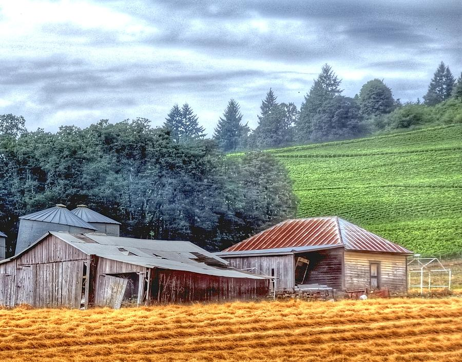 Shed And Grain Bins 17238 Photograph