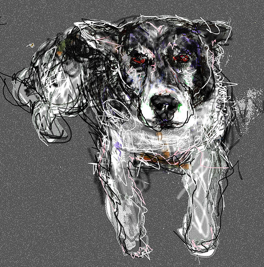 Dog Digital Art - Shelby by Joyce Goldin