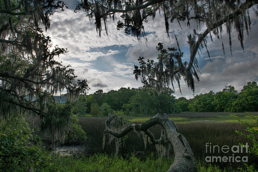 Shem Creek Salt Marsh Photograph