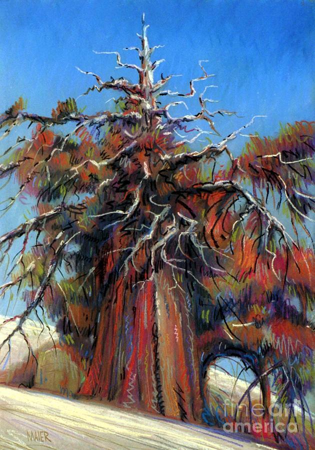 Juniper Painting - Sierra Juniper by Donald Maier