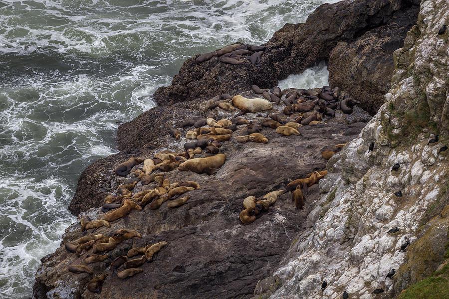 Oregon Coast Photograph - Siesta by Calazones Flics