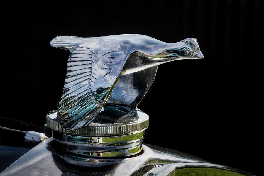 Silver Goose by Mark David Gerson