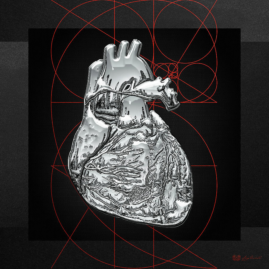 Human Heart 3d Photograph - Silver Human Heart On Black Canvas by Serge Averbukh