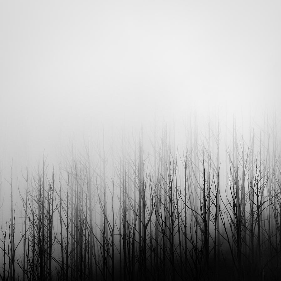 Skeleton trees 3 by Mihai Florea