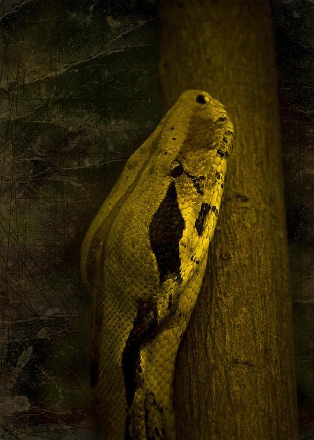 Black Snake Photograph - Snake by Svetlana Sewell