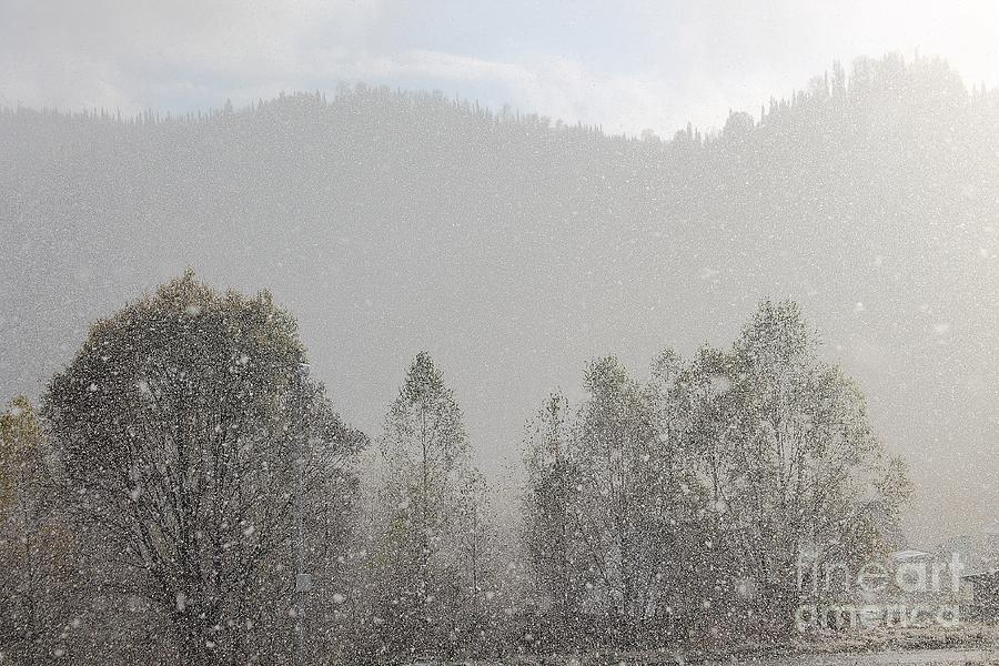 Snow Falling Heavily In The Forest With Focus On Snowflakes. Photograph