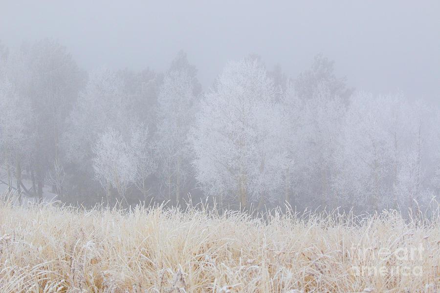 Snow For Thanksgiving On Bald Mountain Photograph