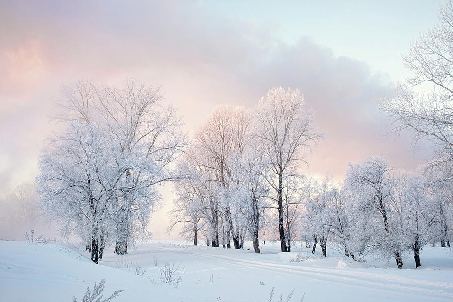 Snowy frozen landscape of sunrise on lakeside with trees Photograph by Oleg  Yermolov