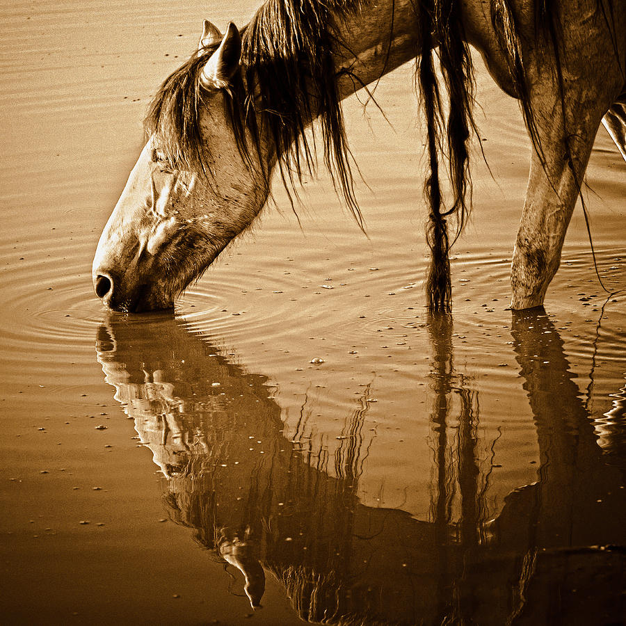 Equine Photograph - Somewhere West Of Laramie by Ron  McGinnis