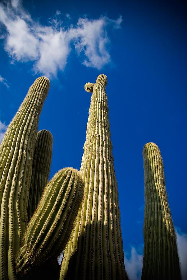 Desert Photograph - Sonoran Desert by Patrick  Flynn