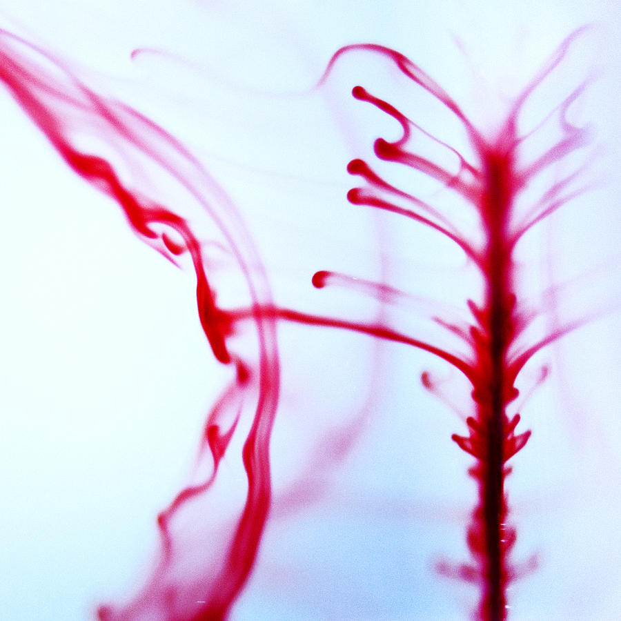 Abstract Photograph - Spine by Ryan Heffron