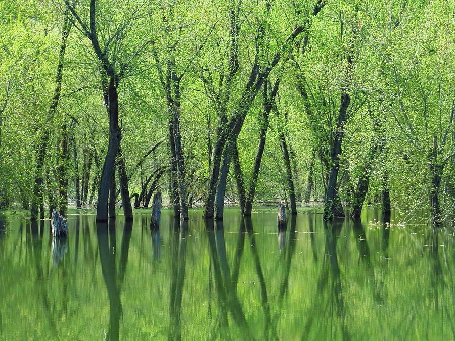 Trees Photograph - Spring Green Reflections  by Lori Frisch
