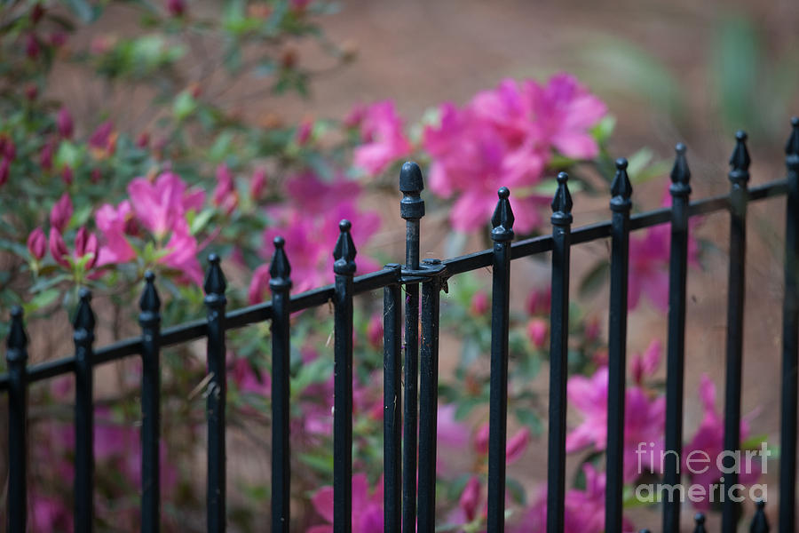 Spring Is Bursting Photograph
