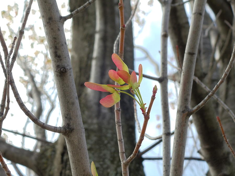 Indiana Photograph - Spring Whirligig by Colleen Cornelius