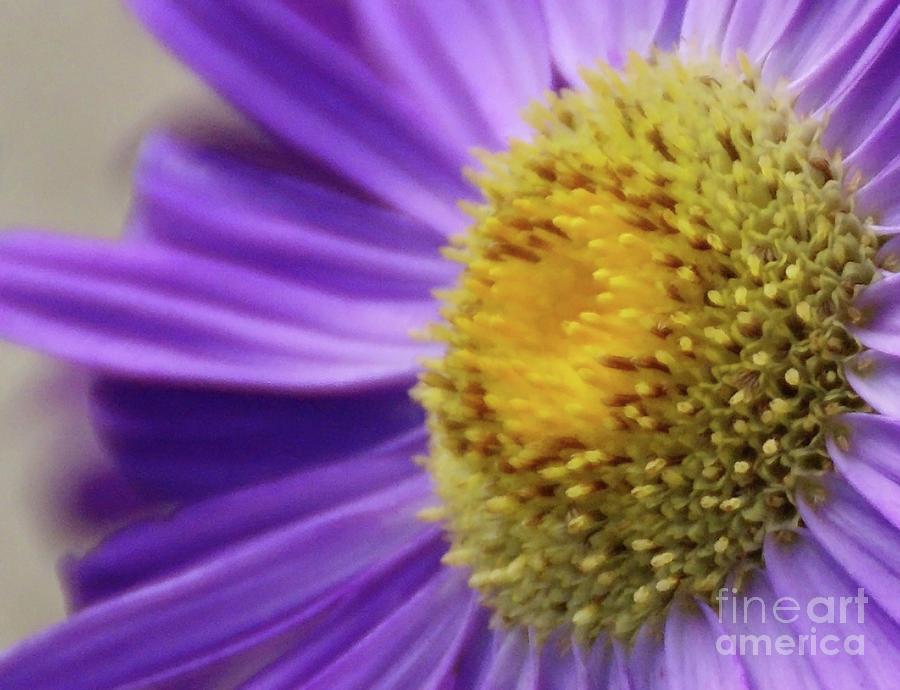 Flower Photograph - Springtime by Linda Shafer
