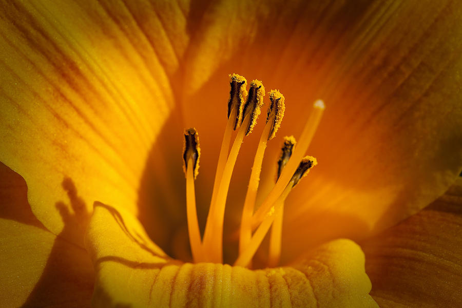 Flowers Photograph - Stamens by Kelley King