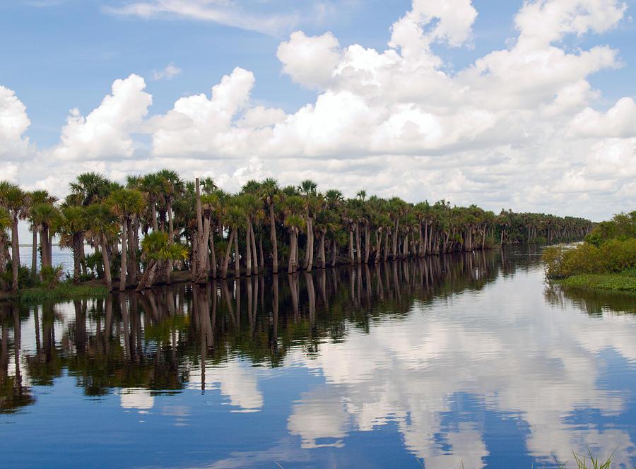 Stick Marsh In Fellsmere Florida Photograph by Allan  Hughes