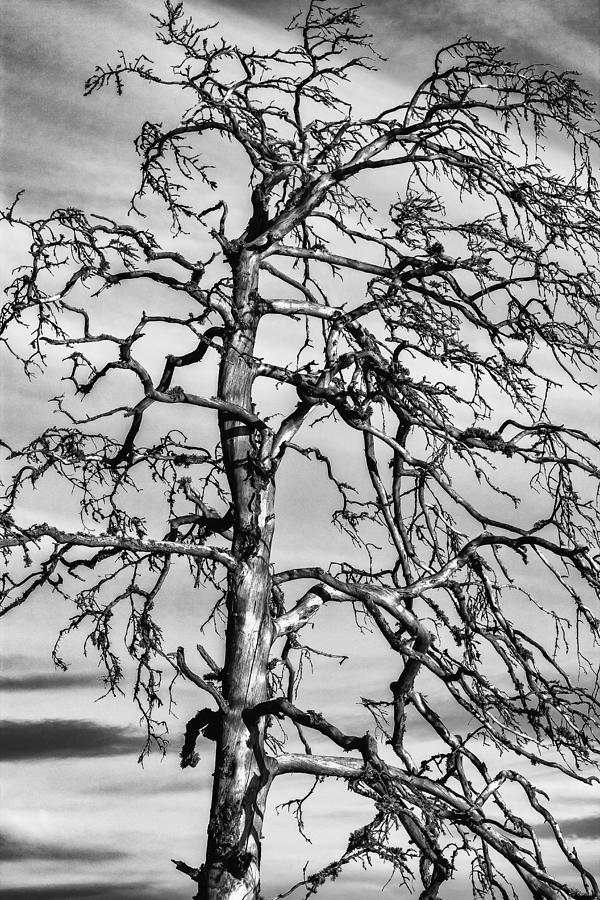 Matti Ollikainen Photograph - Still Standing - Black Edition by Matti Ollikainen