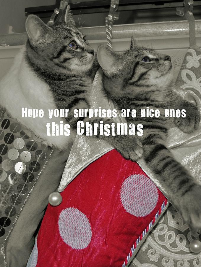 Kitten Photograph - Stocking Stuffers Quote by JAMART Photography