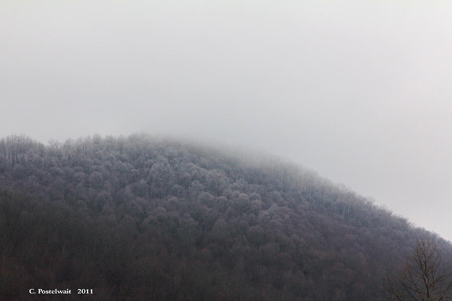 Trees Photograph - Stormy Day by Carolyn Postelwait