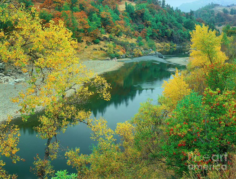 stream fall color fir trees central california by Dave Welling