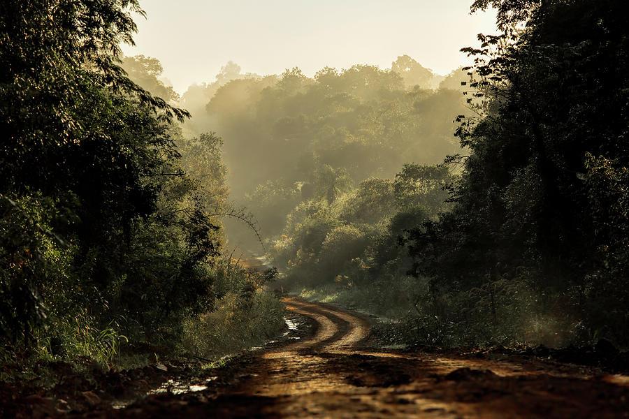 subtropical rainforest in Argentina by Pablo Rodriguez Merkel