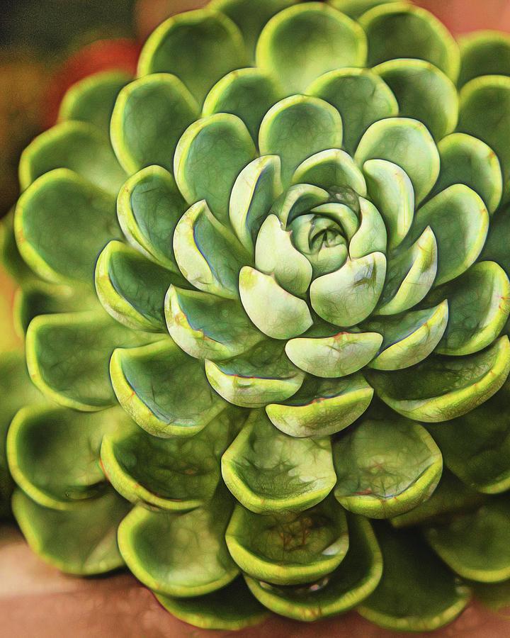 succulent by Jaki Miller