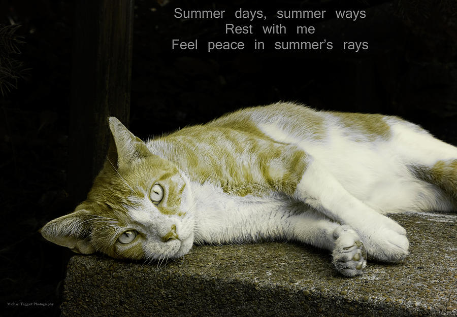 Cat Photograph - Summer Days by Michael Taggart II