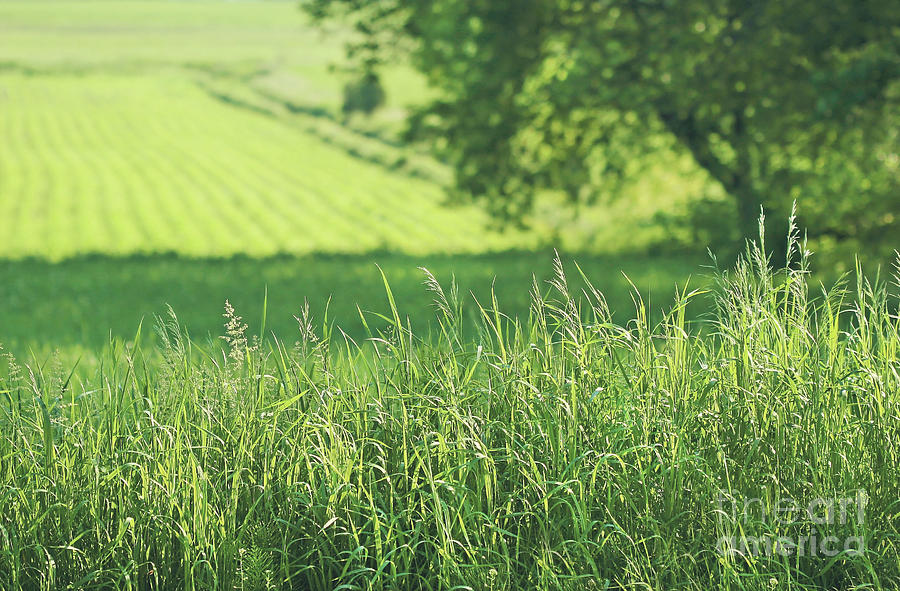 Agricultural Photograph - Summer Fields Of Green by Sandra Cunningham
