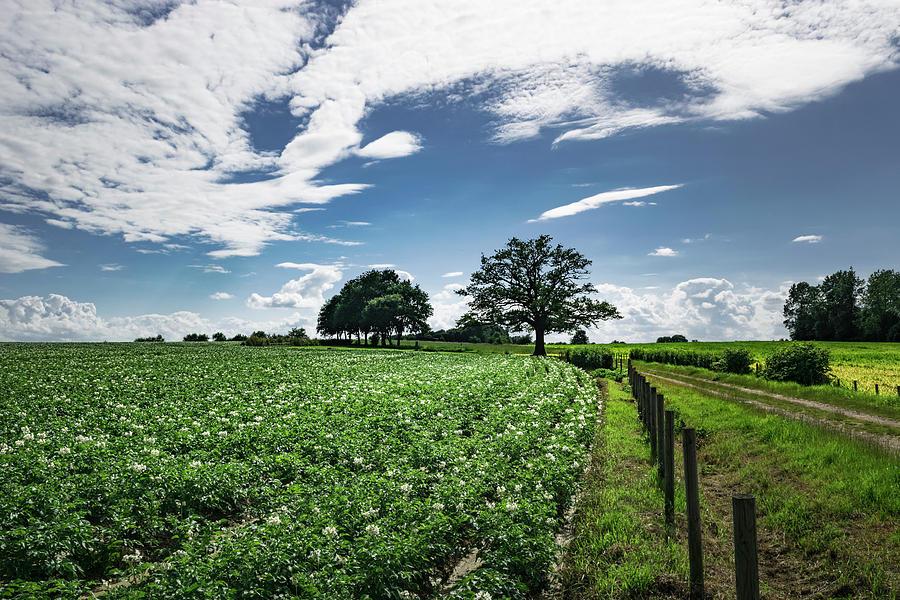 Summer Landscape Photograph
