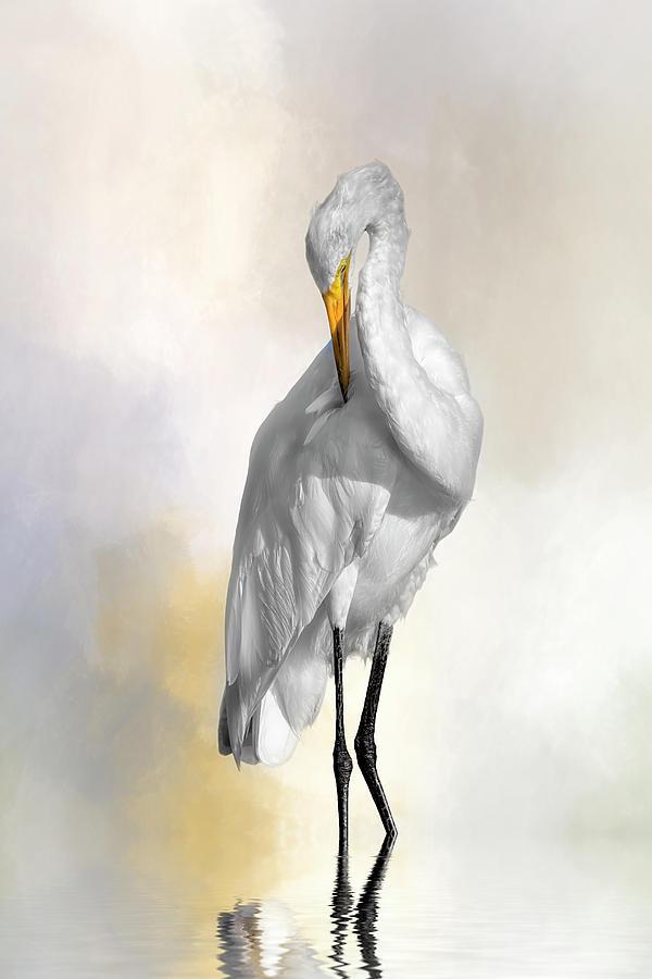 Egret Digital Art - Sun Kissed by Cyndy Doty