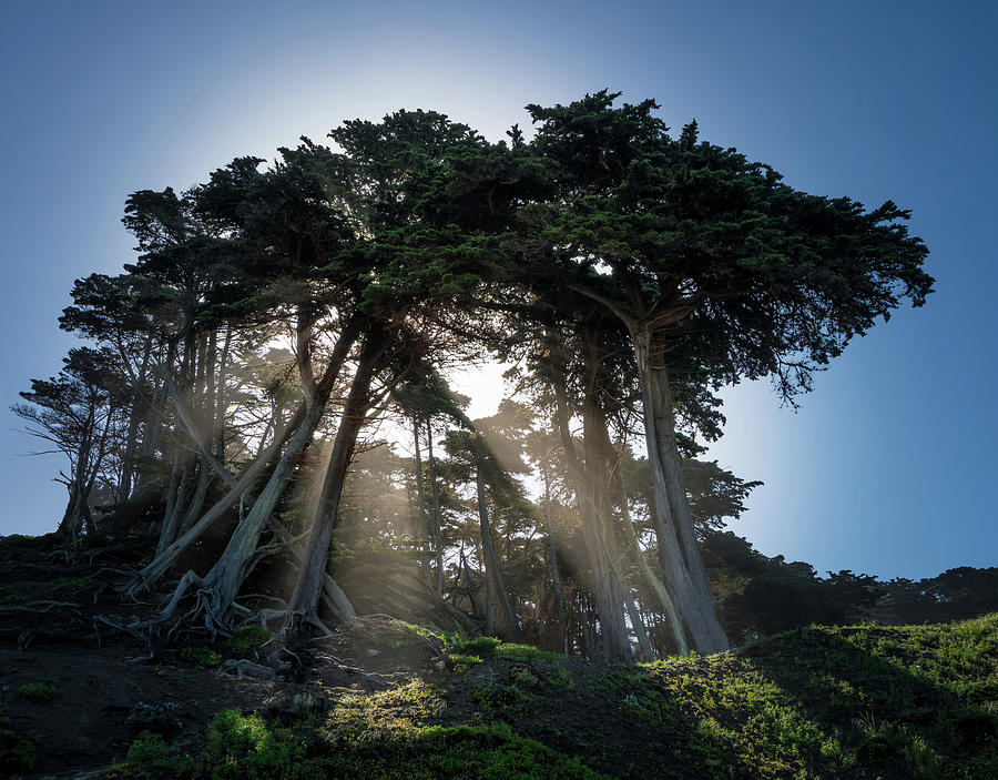 Baker Beach Photograph - Sunbeams From Large Pine Or Fir Trees On Coast Of San Francisco  by Steven Heap
