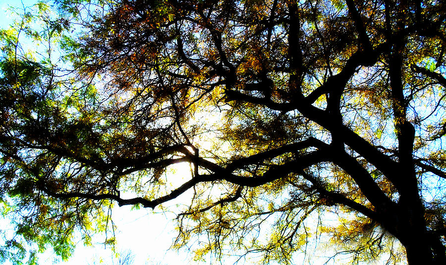 Trees Photograph - Sunday Afternoon by Julie Hamilton