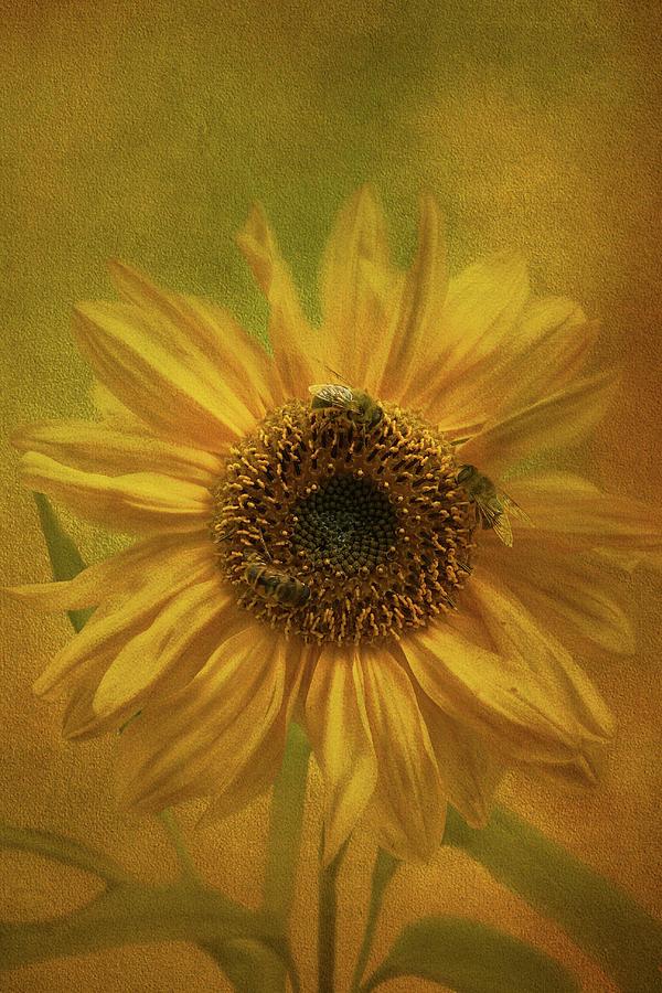 Sunflower by Susan Leonard