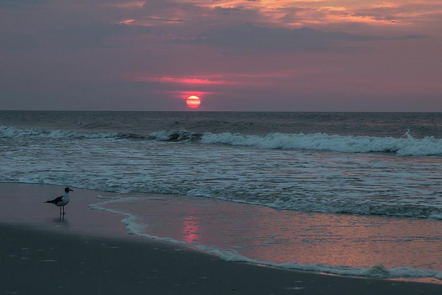 Beach Photograph - Sunrise At The Beach by Carol DeGuiseppi