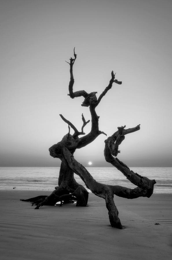 Sunrise On Driftwood In Black And White Photograph by Greg Mimbs