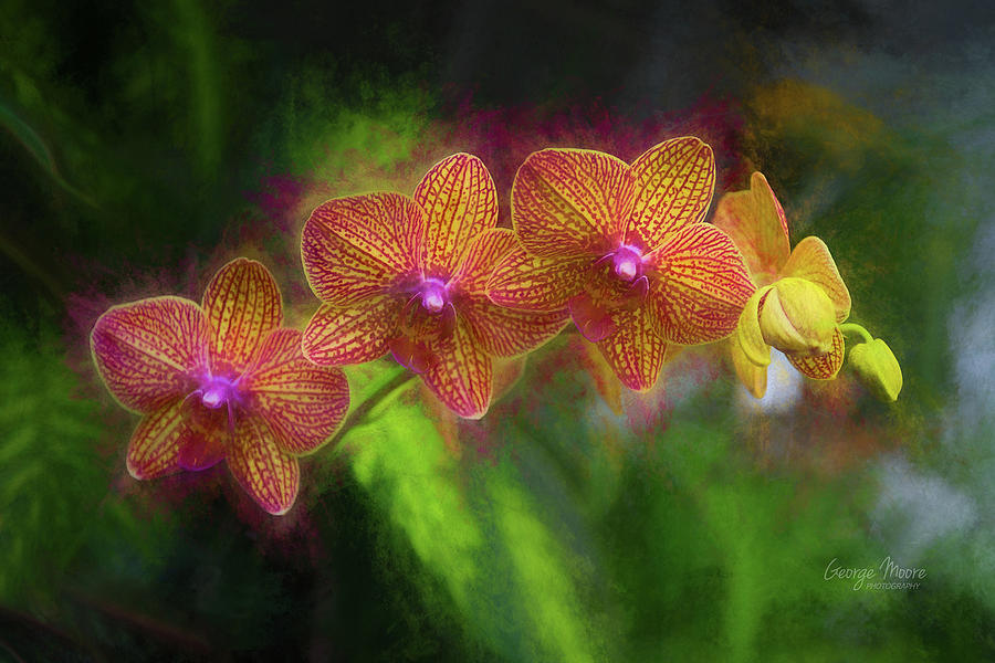 Floral Photograph - Sunset Doritaenopsis Orchid by George Moore