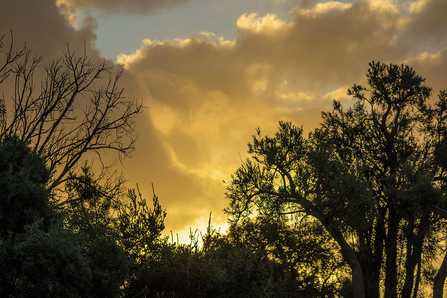 Sunset Photograph - Sunset Glow by Tania Read