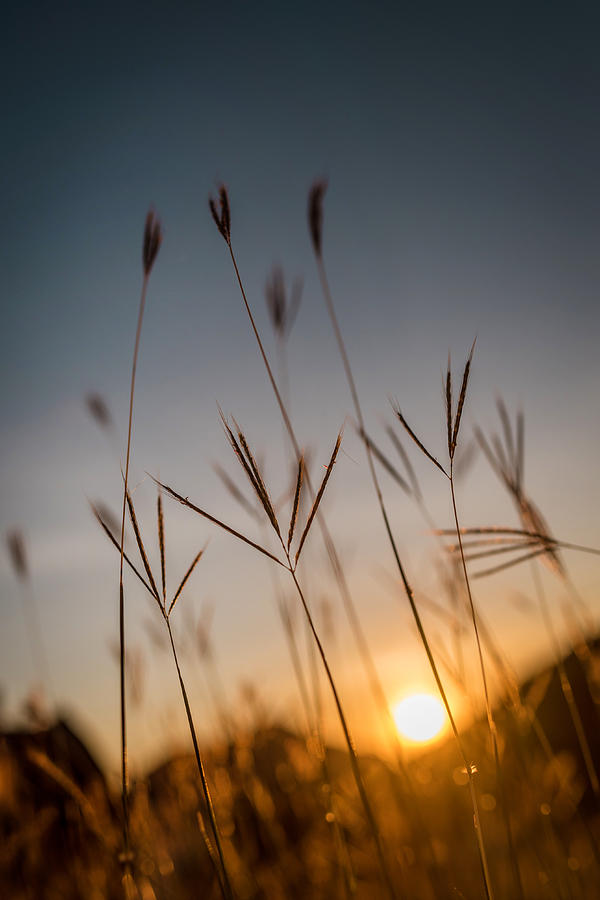 Sunset Grass by Daniel Marcion